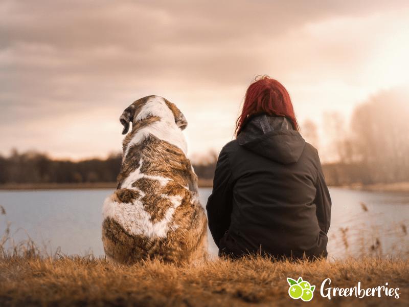 nachhaltig mit Hund
