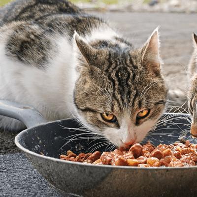 nachhaltiges Katzenfutter