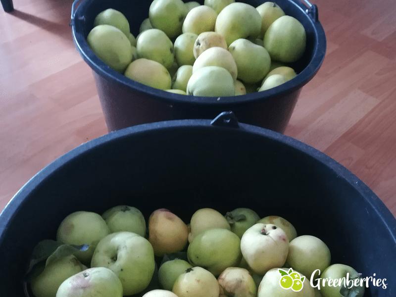 Apfelmus selber machen Aepfel