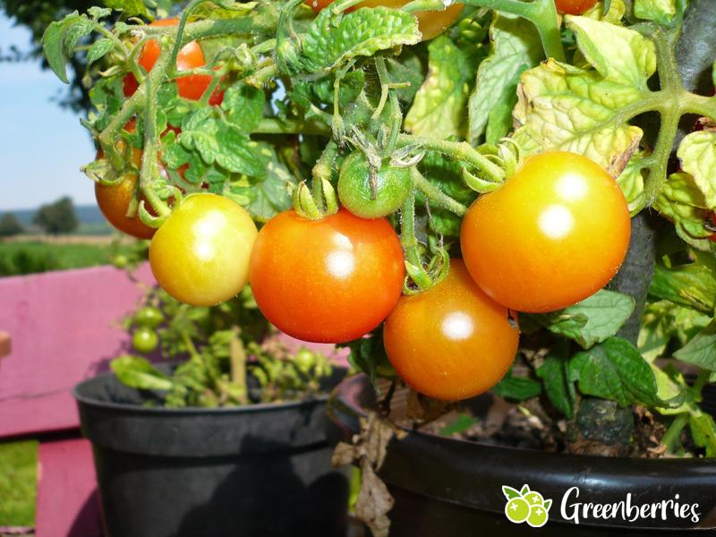 Nachhaltige Vorsätze - eigene Gemüsepflanze