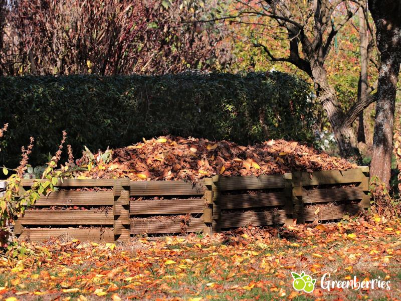 Laub im Kompost